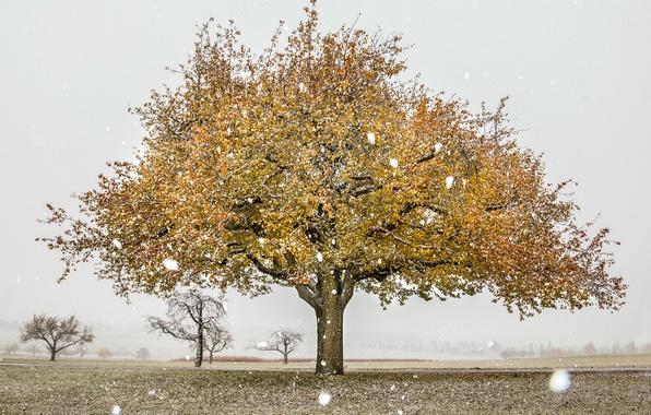 Picture field, autumn, snow, tree