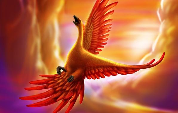 Picture flight, bird, being, art, Phoenix, in the sky, goldenphoenix100