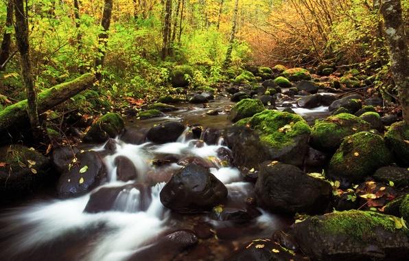 Picture autumn, nature, river, stones, foliage, threads