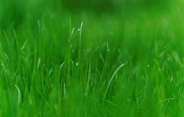 Picture greens, grass, nature, photo