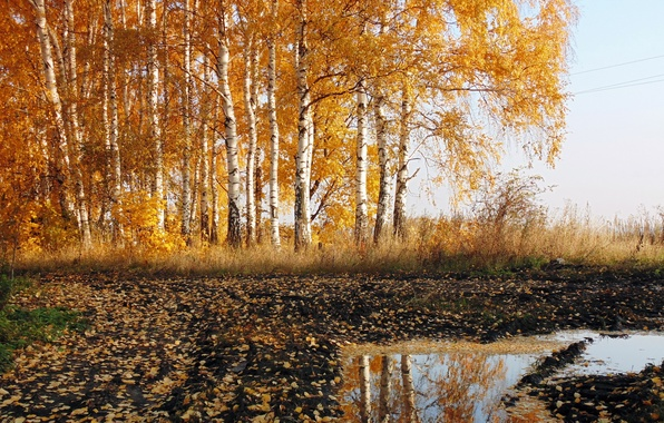 Picture road, autumn, nature, birch
