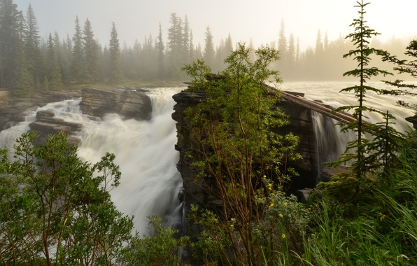 Picture forest, river, waterfall, stream, morning