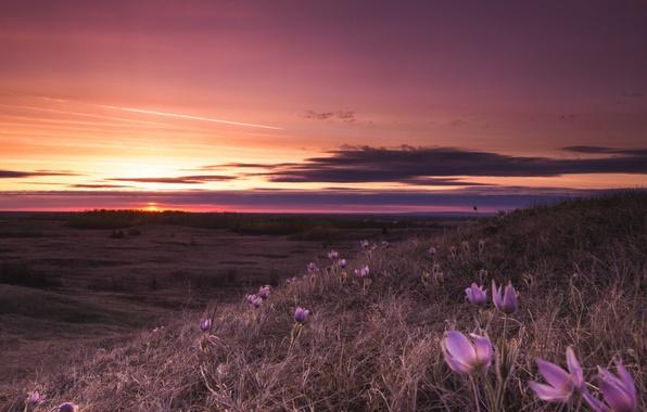 Picture field, landscape, flowers, night