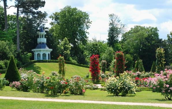 Picture trees, flowers, design, lawn, France, Paris, roses, garden, track, the bushes, Bagatelle Rose Garden