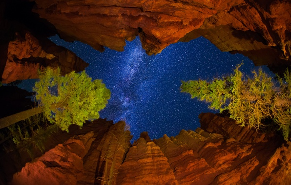 Picture the sky, stars, trees, night, rocks, USA, the milky way, Utah, National Park Bryce Canyon