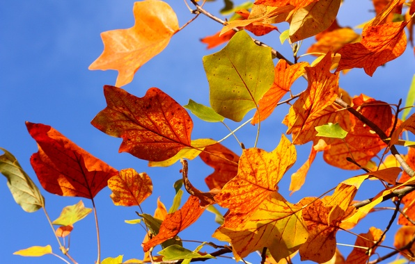 Picture autumn, the sky, leaves, branches, tree, branch, yellow, red