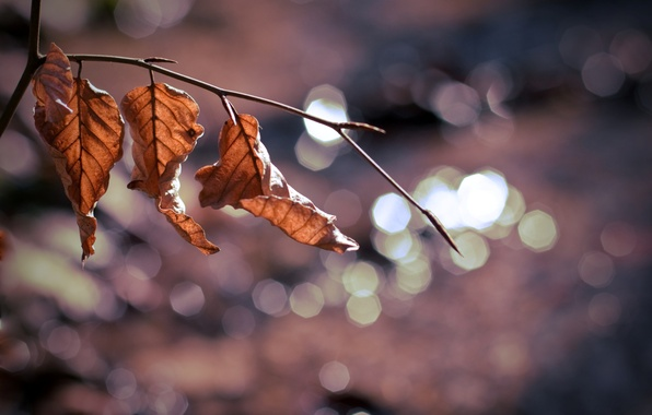 Picture leaves, macro, background, tree, widescreen, Wallpaper, blur, branch, wallpaper, leaves, leaf, widescreen, background, macro, tree, …