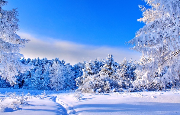 Picture winter, forest, the sky, the sun, snow, trees, blue, blue, glade, path
