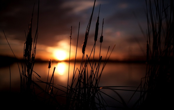Picture the sky, the sun, macro, sunset, nature, background, widescreen, Wallpaper, plant, blur, spikelets, wallpaper, ears, ...