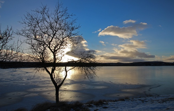 Picture ice, winter, the sun, sunset, lake, tree, cloud