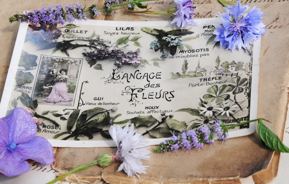 Picture flowers, style, old, ink, vintage, postcard, hydrangea, letters, spring