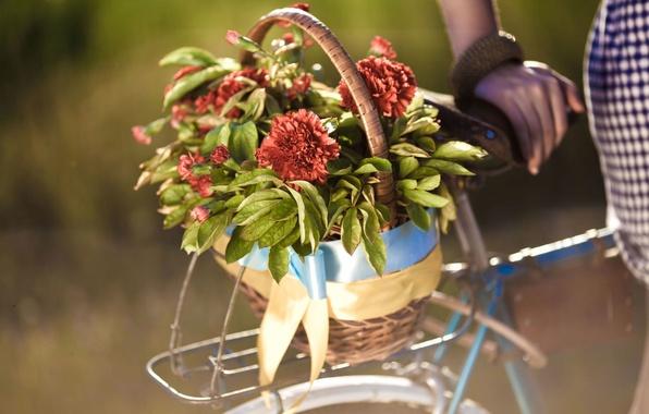 Picture leaves, girl, flowers, bike, background, widescreen, Wallpaper, basket, hand, blur, wallpaper, flowers, bicycle, widescreen, flowers, …