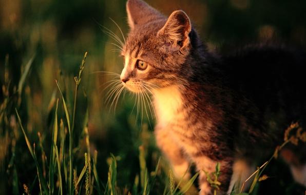 Picture cat, grass, cat, macro, kitty, cat
