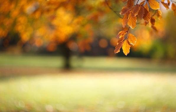 Picture autumn, macro, foliage, branch, bokeh