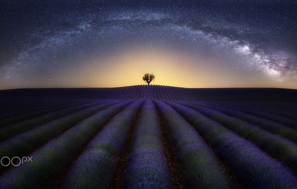 Picture field, the sky, stars, night, tree, the milky way, lavender