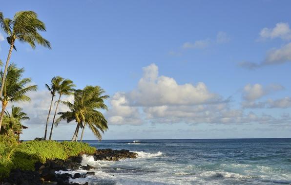 Picture sea, the sky, clouds, landscape, tropics, palm trees, shore