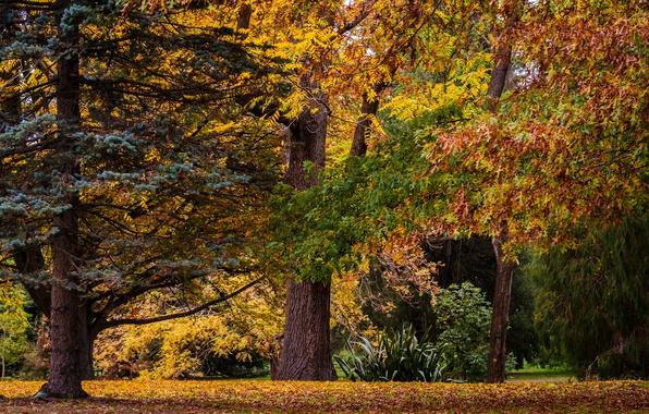 Christchurch Wallpaper: Wallpaper Autumn, Forest, Trees, Nature, New Zealand