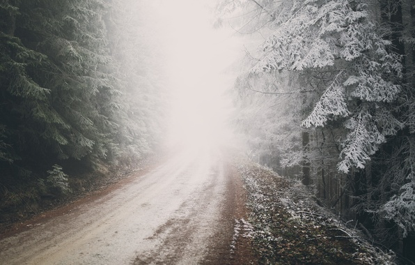 Picture winter, frost, road, forest, nature, fog, Austria, frost