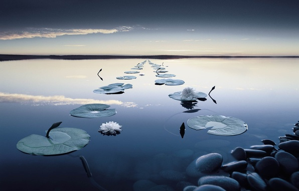 Picture forest, flower, the sky, leaves, clouds, sunset, surface, reflection, river, stones, stems, calm, Water, the …