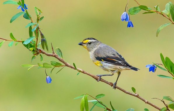Picture leaves, flowers, bird, branch, feathers, beak, tail