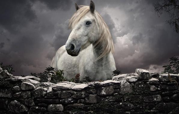 Picture HORSE, MANE, WHITE, HEAD