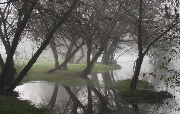 Picture water, trees, fog, reflection