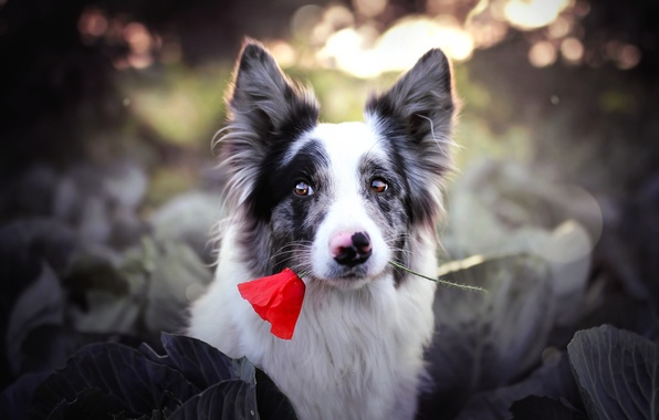 Picture flower, look, each, dog