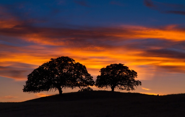 Picture the sky, clouds, trees, silhouette, hill, glow