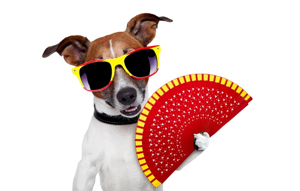 Picture dog, humor, fan, glasses, white background, Jack Russell Terrier