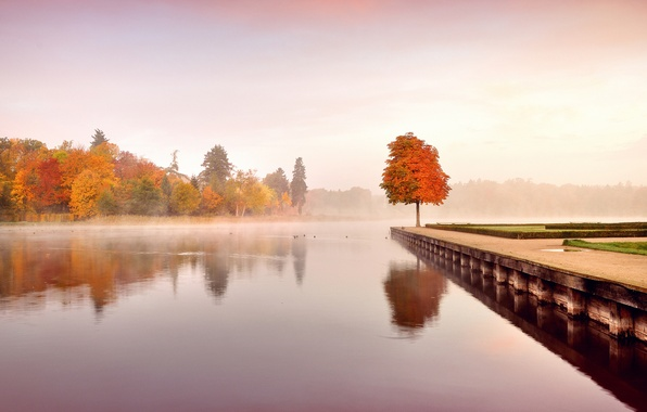Picture autumn, leaves, water, trees, landscape, nature, fog, morning, yellow, orange