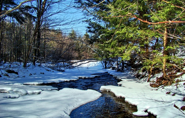 Picture forest, the sky, snow, trees, landscape, river, stream, spring
