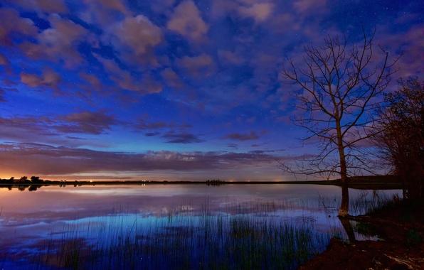 Picture stars, clouds, night, lake, tree, dawn, glow