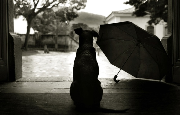 Picture style, umbrella, 152, yard, dog