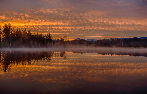 Picture forest, fog, reflection, dawn, morning, Germany, Bayern, Germany, Bavaria, Lake Kirchsee, lake Kirchsee