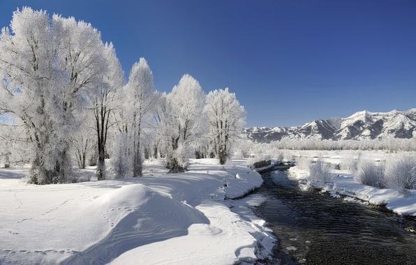 Picture winter, frost, snow, trees, river, Nature
