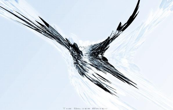 Picture flight, mesh, bird