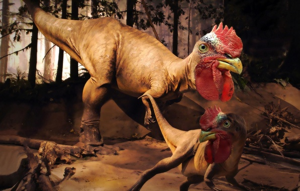 Picture dinosaur, rooster rex, invented