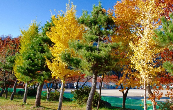 Picture autumn, water, trees, the city, home, Japan, Tokyo