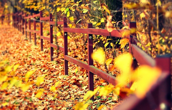 Picture autumn, leaves, macro, trees, background, tree, widescreen, Wallpaper, the fence, yellow, the fence, wallpaper, falling …