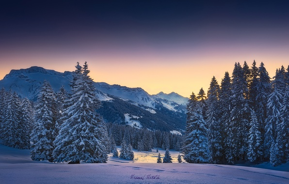Picture winter, forest, snow, mountains, morning, Alps