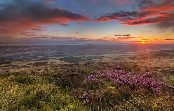 Picture field, the sun, flowers, dawn, hills, coast