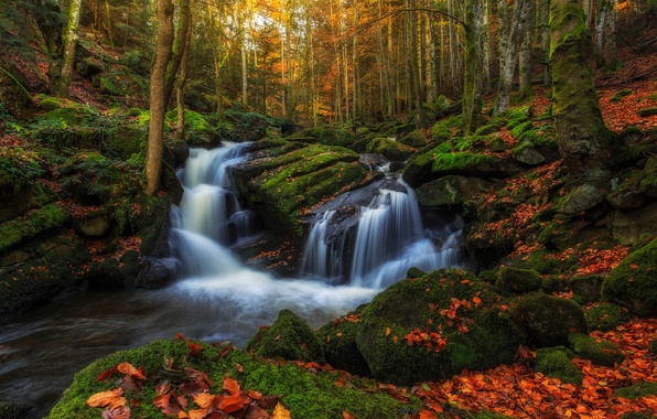 Picture autumn, forest, water, trees, stream, stones, foliage, France, moss, excerpt, threads, region, Auvergne