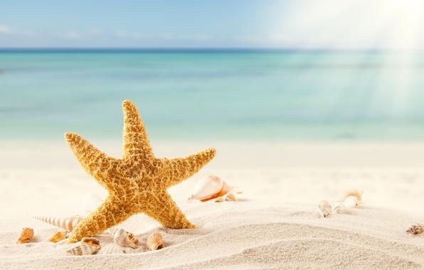 Picture sand, sea, beach, tropics, shell, starfish, beach, sea, sand, shells, starfish, tropics
