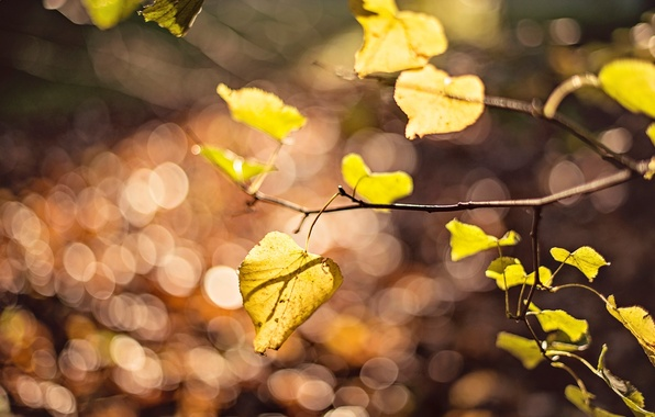 Picture leaves, macro, yellow, background, tree, widescreen, Wallpaper, blur, branch, leaf, wallpaper, leaf, yellow, widescreen, background, …