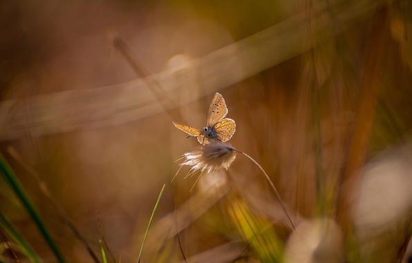 Picture summer, grass, glare, butterfly, grass