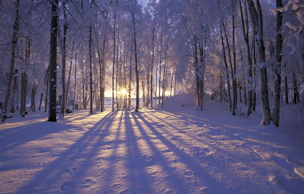 Picture winter, frost, forest, the sun, snow, trees. rays