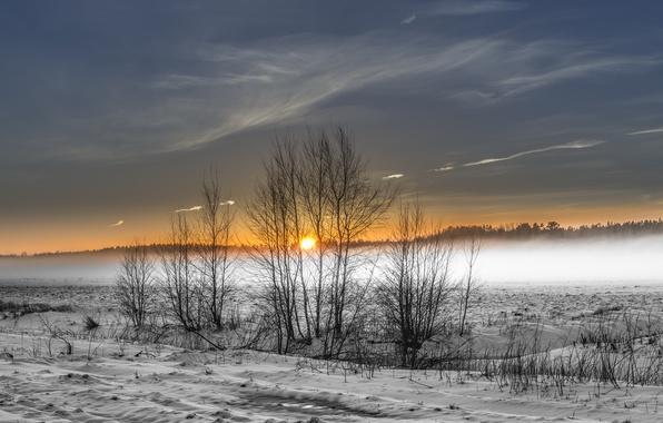 Picture winter, field, fog