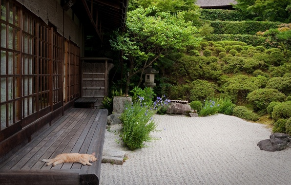 Picture sand, cat, cat, trees, house, Japan, garden, the bushes, patio