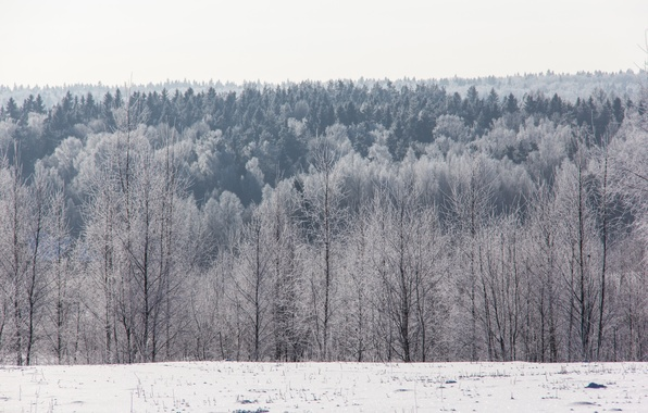 Picture winter, frost, forest, snow, trees, horizon, frost, Sunny, cold