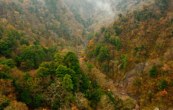 Picture autumn, forest, trees, mountains, slope